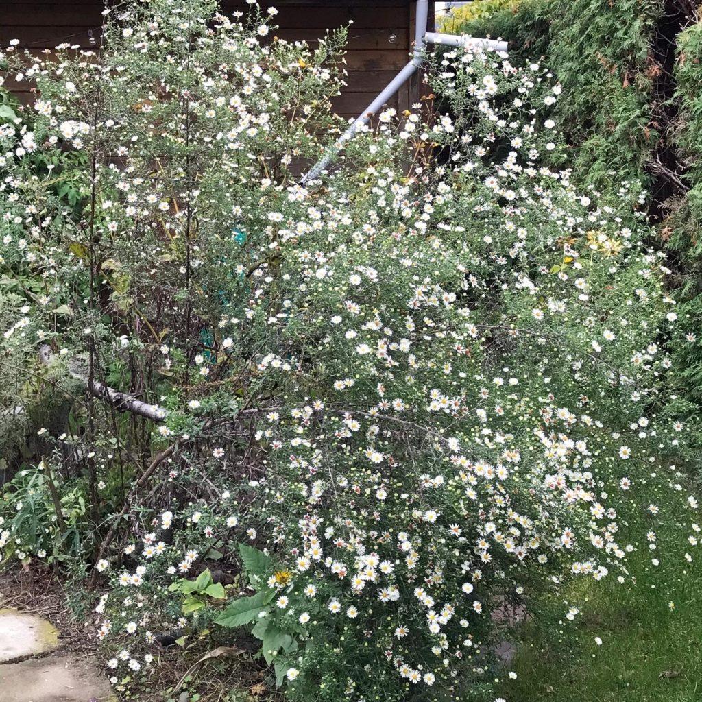 Vom kleinen Glück: Herbstblüher