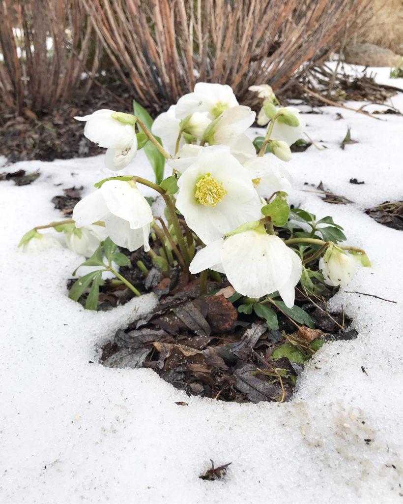 Vom kleinen Glück: Schneeschmelze