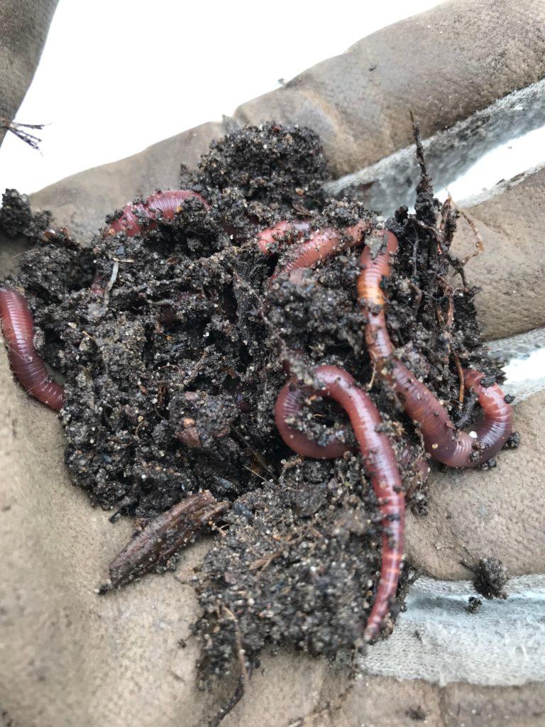 Wie baust du Humus auf Kompost- das Gärtnergold