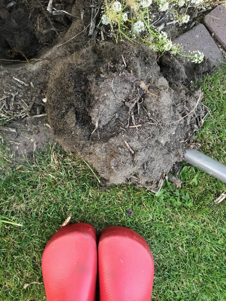 Bodenbestimmung Spatenprobe