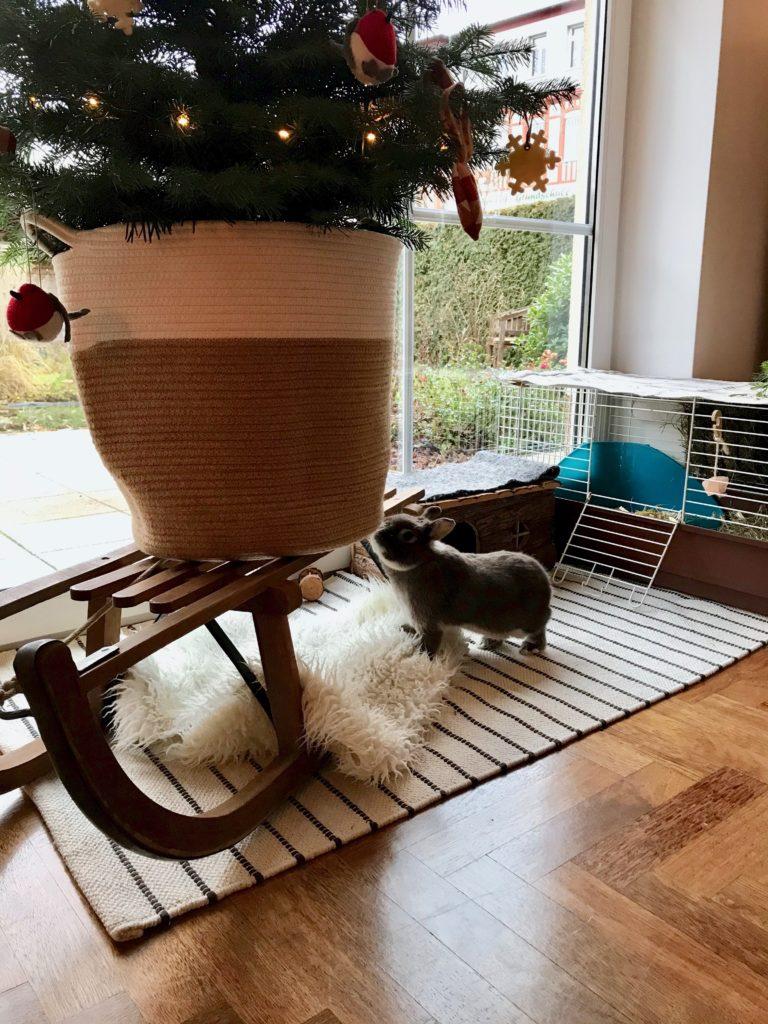 Das Weihnachtskaninchen