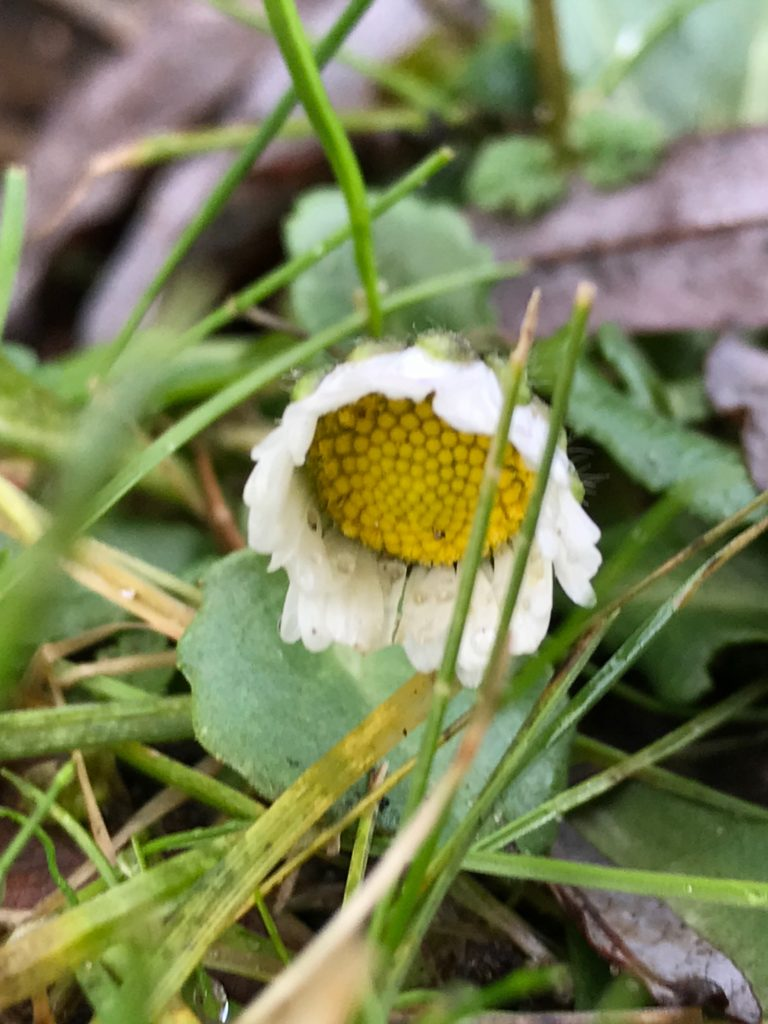 Vom kleinen Glück: Frühe Frühlingsgefühle