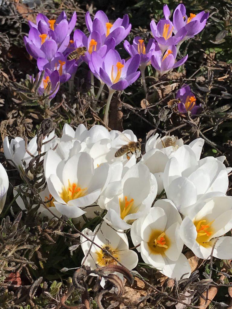 Vom kleinen Glück: Das Summen der Bienen