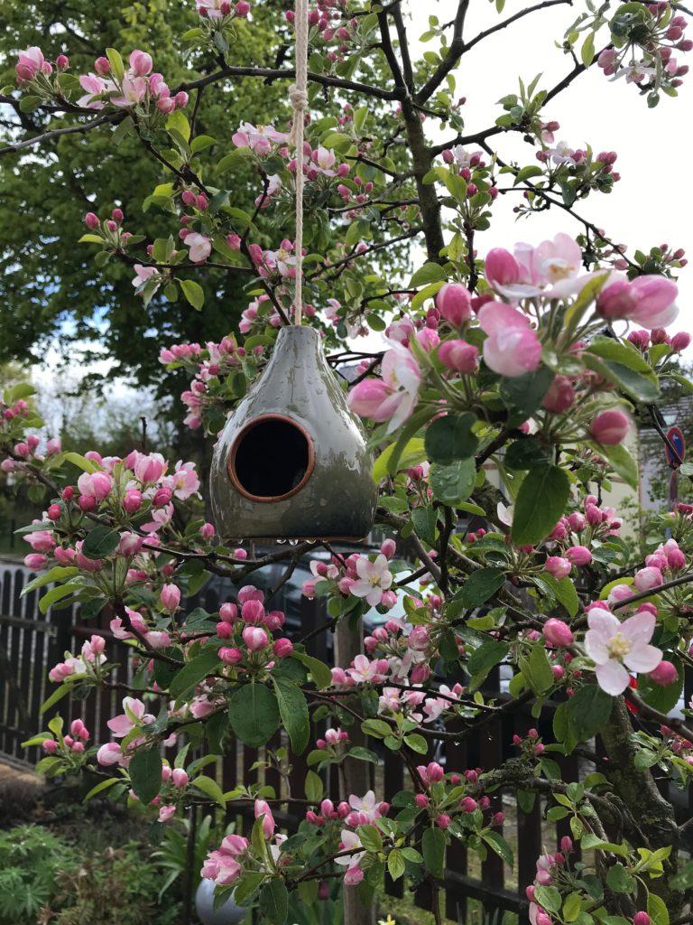 Vom kleinen Glück: Ganz in Ruhe Apfelbaumblüte