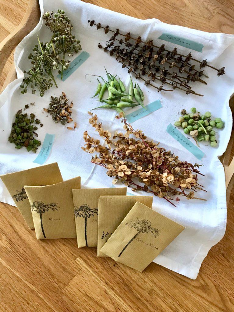 Gartenarbeiten im November: Das Saatgut trocknen und verpacken