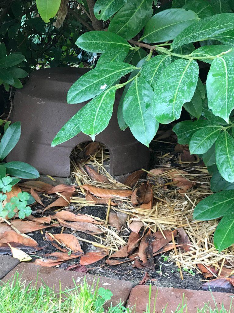 Gartenarbeiten im November: Das Igelhaus reinigen