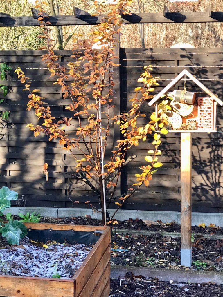 Gartenarbeiten im Dezember- Laub harken