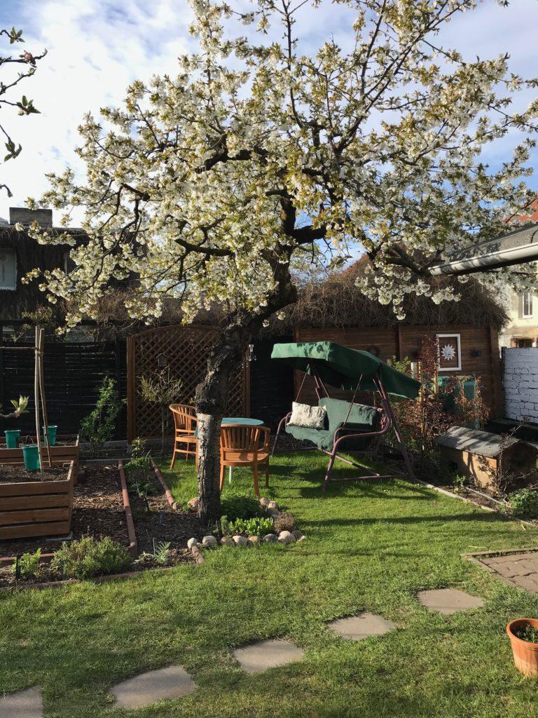 Lieblingsplatz unter dem Kirschbaum