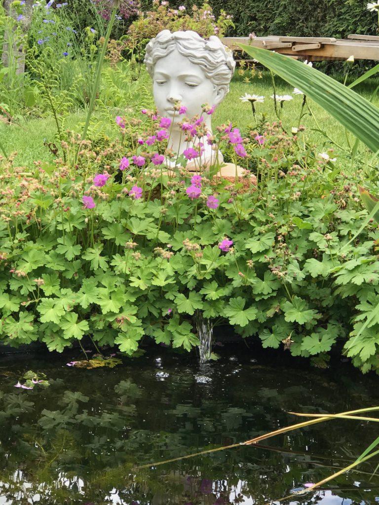 Storchschnabel am Teich