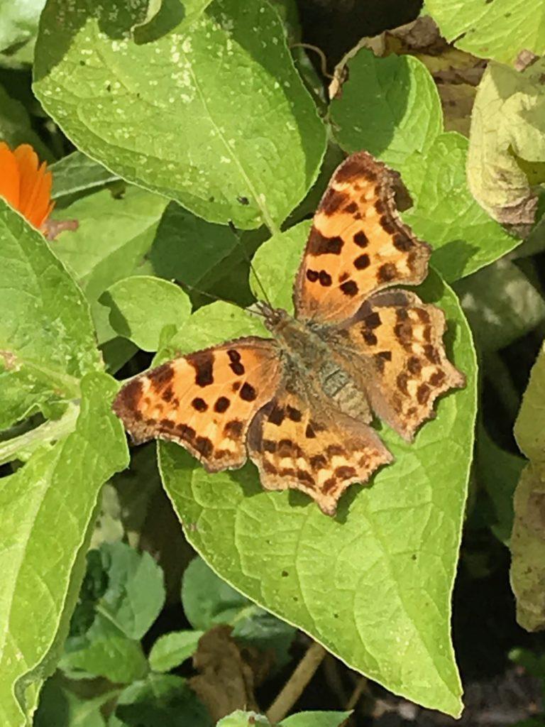 Vom kleinen Glück: Schmetterlingsbesuch