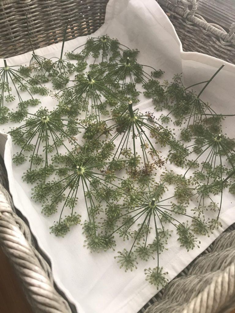Vom kleinen Glück: Heilpflanzenschule